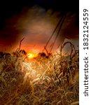 Rural Corn Field In Eastern...