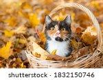 Cat In The Basket. Cat Sitting...