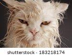 funny wet cat    Shutterstock . vector #183218174