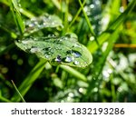 Several Perfect Water Drops On...