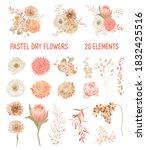 elegant vector dry flowers ... | Shutterstock .eps vector #1832425516