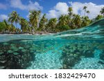 Tropical Seascape  School Of...