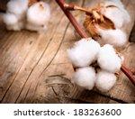 Cotton. Beautiful Cotton Plant...