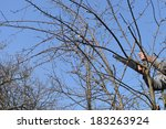 Man Cutting The Branch Of A...