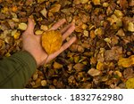 Holding Yellow Fall Leaf On...