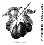 avocado branch botanical... | Shutterstock .eps vector #1832821069
