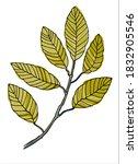 Elm Tree Branch Line Art....