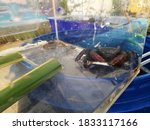 Sea Critter Crab In A...