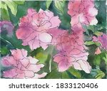Watercolor Illustration. Pink...