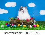 Cat In A Nest Of Birds On The...