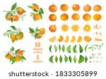 mandarin fruits  flowers ... | Shutterstock .eps vector #1833305899