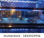 Lobster In Blue Light Tank