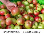 Appetizing Red Apples In The...