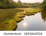 Pacific Northwest Island Slough ...