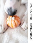Dog Paws With A Pumpkin...