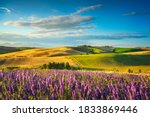Lavender Flowers In Tuscany ...
