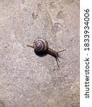 Snail On The Asphalt Top View...