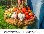Farmer With Vegetables In The...