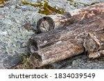 Close Up Of Driftwood On The...