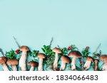 Forest Boletus Mushrooms On...