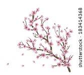 soft pink cherry blossom... | Shutterstock .eps vector #183414368