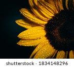 Sunflower Yellow On Black...