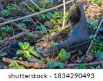 Forgotten Shoes In Nature That...