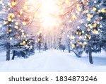 Winter fir tree christmas scene ...