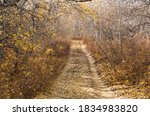 Small photo of Fall lane lined with yellow aspen trees and fallen leaves, some denuded trees.