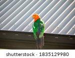 Australian Native Birds In The...