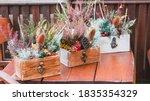 Chrysanthemum Plants On...