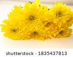 Yellow Chrysanthemum Flowers...