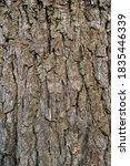 Elm Tree Trunk Texture Close Up ...