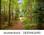 Rain Forest Trail In The...
