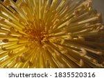 Soft Yellow Flower Center Of...
