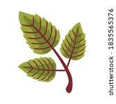 autum serrateds leafs flat...