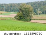 A Rural Landscape With Trees I...