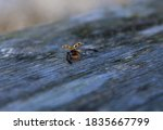 Ladybug On Top Of A Wooden...