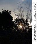 Sunburst Seen Through Branches...