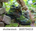 Shoe Forgotten In Forest...
