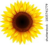 Sunflower Isolated  Realistic...