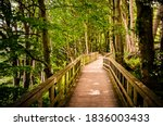 Wooden Hiking Bridge Through A...