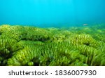 Ocean Floor Covered By Green...