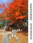 Colorful Autumn Trees Shade...