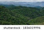 Small photo of Atlantic forest remnant located in Nova lima, MG, Brazil