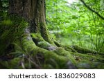 Photo Of Mossy Roots Of Plants...