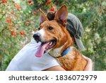 Animal Rescue  Dog Adoption ...