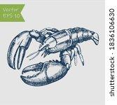 Ink Sketch Of Spiny Lobster....