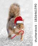 Squirrel Santa. Cute Squirrel...
