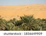 Date Palm Trees And The Sand...